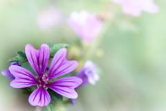 Flower - not really Highkey but... (TM Photography Vision) Tags: hmm flower power high key highkey blume bl¨üte makro macro monday