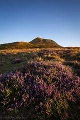 Purple Sunset (Calypso~) Tags: puydedôme auvergne france fleur montagne volcan