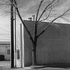 (el zopilote) Tags: albuquerque newmexico street architecture cityscape graffiti trees powerlines clouds canon eos 5dmarkii canonef50mmf18ii fullframe bw bn nb blancoynegro blackwhite noiretblanc digitalbw bndigital schwarzweiss monochrome 500