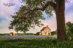 Bluebonnet House/Framed with Tree