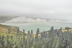 Seven Sisters (k_benton89) Tags: seven sisters flower cliff white chalk brighton uk england dangerous edge purple