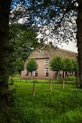 Saxon farmhouse.. (http://www.paradoxdesign.nl) Tags: farmhouse saksisch saxon drenthe orvelte farm ottenshoes museumdorp netherlands holland nederland dutch reed roof shutters