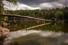 The Fallen Tree (Jens Haggren) Tags: lake forestlake trees fallen tree water reflections sky clouds light landscape longexposure le nacka sweden jenshaggren