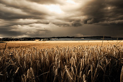 beautiful sky in burgenland (adschi berger) Tags: field cereals landscape picoftheday colorful pro professional photographer photoshoot nature countryside view sky clouds farm nikon