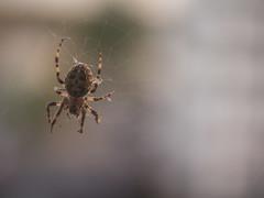 75: Spider