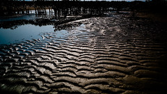 low tide (ian.latte) Tags: low tide mangrove coast sea mud swamp plant trail water nature outdoor hongkong laufaushan 28mm leicam leica