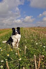 Fleur in der Kamille (Uli He - Fotofee) Tags: ulrike ulrikehe uli ulihe ulrikehergert hergert fotofee burghaun plätzer