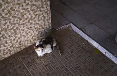 Cat in Rabat's Medina (Simenza) Tags: marocco maroc rabat