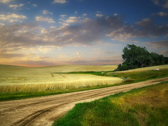 Dakota field 5 (mrbillt6) Tags: landscape rural prairie farmland field road scenic wheat trees outdoors country countryside northdakota