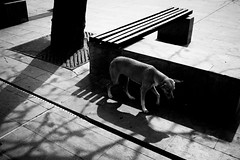 dog (jp_dazan) Tags: dog street streetphotography personal photography barranquilla blackwhite bw caribe colombia portfolio light