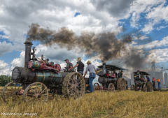 Plowing with three Advance Engines (David Clippinger) Tags: wauseon tractorshows steamshow steam steamengine steamploughing steamplowing advancesteamengine nationalthreshersassn wauseonohio