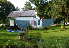 Sheets on the line (Room With A View) Tags: laundry clothesline cloud9 odc