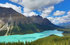 Turquoise Treasure from Glaciers (Golden Ginkgo) Tags: laketurquoise peytolake canadianrockies turquoiseblue glacierfedlake nature banffnationalpark cans2s