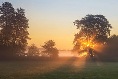 the first rays (Lena Held) Tags: morning light lights sunlight sun sunbeams summer fog foggy sunrays rays shine meadow fields sky blue green orange yellow trees plants canon 5dsr 1635mm weitwinkel vollformat travel global outside outdoor sunrise colored colors colorful landscape scape squareformat square germany bavaria oberpfalz bayern deutschland world autumn awakening awake