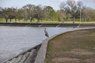 HBM Still Life with Heron and Benches