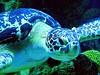 Sea Turtle (haraldluiki3) Tags: seaturtle turtle meeresschildkröte animalphotography animaltheme animalthemes animal unterwasser unterwasserfotografie unterwasserwelt underwater underwaterphotography underwaterworld
