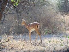 DSC00157 (francy_lioness) Tags: zebra giraffa elefante leonessa bufalo leoni lions tarangirenationalpark parks tanzaniasafari safari africasafari
