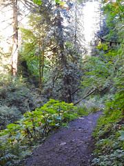 Multnomah-Falls-Columbia-Gorge-DSCN3346