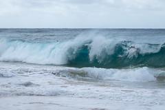 J68A6832-2 (patriciacorsiatto) Tags: hawaii2017 at beach