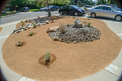 DLS Best Low Water Landscaping Drought Tolerant Resistant Service in Claremont California CA (funny.pictures) Tags: landscape landscaping drought tolerant droughttolerant claremont claremontca claremontcalifornia dlslandscape dlslandscaping lowwater claremonthomes claremonthome claremonthouse claremonthouses inlandempire claremontlandscaping claremontlandscape