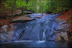 Contrastes. (antoniocamero21) Tags: riera rio agua rocas hayas árboles paisaje color foto sony natural parc montseny cascada composición barcelona catalunya