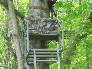 Alabama Luxury Whitetail Hunt 14