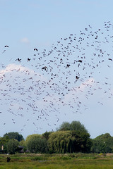 Bird reservation (Joelle Rademakers Fotografie) Tags: summer 2017 nikonphotography nikon d3100 netherlands randstad nature naturelover natureaddicts naturelovers bird birds birdreservation haastrecht vlistdijk