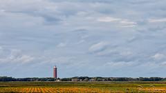 Pumpkins on the field (BraCom (Bram)) Tags: bracom landscape landschap pumpkin pompoen field akker trees bomen lighthouse vuurtoren house huis cloud wolk sky ouddorp goereeoverflakkee zuidholland nederland southholland netherlands holland 169 widescreen bramvanbroekhoven nl