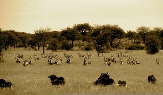 Namibia Safari - Lake Lodge 41