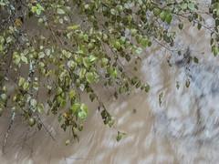 UW110168.jpg (jramspott) Tags: georgia storm river nature water chattahoochee atlanta rain tropicalstorm irma unitedstates us