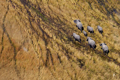 Elephants from the sky (patrickburtin) Tags: