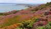 Isle of Wight Coastal Path Totland Bay Headen Warren (D.T.Morris) Tags: walk hiking coastal path isle wight cliff sea headen warren totland bay heather david morris dtmphotography walking hike coast