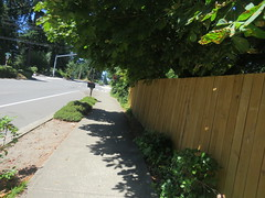 IMG_6490 (Andy E. Nystrom) Tags: bellevue washington wa bellevuewashington clydehill clydehillwashington