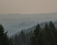 the view (_mo.foto_) Tags: wildfire smoke haze trees sky distance view hike cztrail landscape outdoor 16september2017 oregon pnw aerialperspective atmosphericperspective