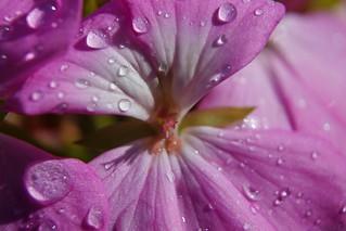 Efter regn (In Explore)