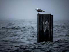 Foggy Lake Michigan - Fullerton Beach, Chicago (nicklaborde) Tags: 500px fog lake sea birds pier seascape seagull seaside lumix foggy panasonic chicago illinois gx7 lumixlounge