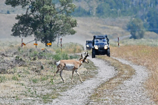 Pronghorn Right of Way