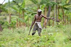 NP_Haiti11