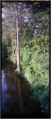 Schölzbach (Ulla M.) Tags: schölzbach toycam expiredfilm 125x36 pseudopano kleinbild freihand analog canoscan8800f pn919 hochformat upright umphotoart analogue film ishootfilm