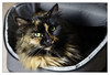 No Room In My Camera Bag (Unintended_Keith) Tags: cat fluffy cute camerabag full feline canon1dx canon50mmf18stm