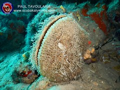 """Kalymnos Diving • <a style=""""font-size:0.8em;"""" href=""""http://www.flickr.com/photos/150652762@N02/35673863843/"""" target=""""_blank"""">View on Flickr</a>"""