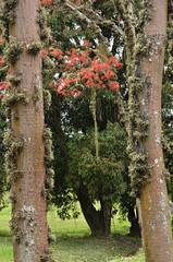 """Portal"" (Márcia Valle) Tags: inverno winter nature minasgerais brasil brazil márciavalle nikon d5100 cloudyday diadeinverno coresdeinverno wintercolors mulungu flores flowers trees árvores portal tillandsias"
