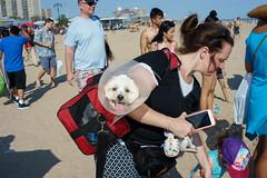 Cone of Shame (dtanist) Tags: nyc newyork newyorkcity new york city sony a7 konica hexanon 40mm brooklyn coney island beach sand cone collar shame pet dog