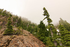 Fog2 (csquags) Tags: tree nature fog clouds green cloud foggy rocks rock washington pnw ellinor olympic national park findyourpark
