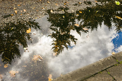 A Shallow Puddle's Depth Of Field (happad fotografie) Tags: puddle reflection trees clouds sky road sidewalk blue grey green white plas nikon nikkor d610 50mm reflectie bomen lucht stoeprand