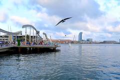 Landing (Fnikos) Tags: port puerto sea water waterfront people seagulls architecture barcelona outdoor