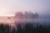 Edit -1-4 (Dane Van) Tags: canadacreekranch ccr atlantamichigan michigan puremichigan sunrise canon5d foggy fog 35mm wildfowl lake lakewildfowl