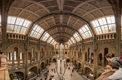 Blue whale at the NHM panorama (Adeypoos) Tags: bluewhale skeleton bones history architecture museum london panorama pano naturalhistorymuseum tourism attraction adrianpollardphotography autopanopro stitch