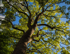 Green and blue is the best colors in the world (Chamikajperera) Tags: green blue tree japan nokogiriyama sky canon majestic