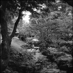 147-05 Japanese Garden (georgeatkinson55) Tags: hp5 ilford film bw blackandwhite 6x6 square autocord minolta tlr garden